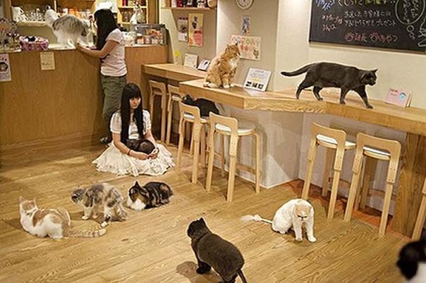 art-Cat-Cafe-Osaka-1