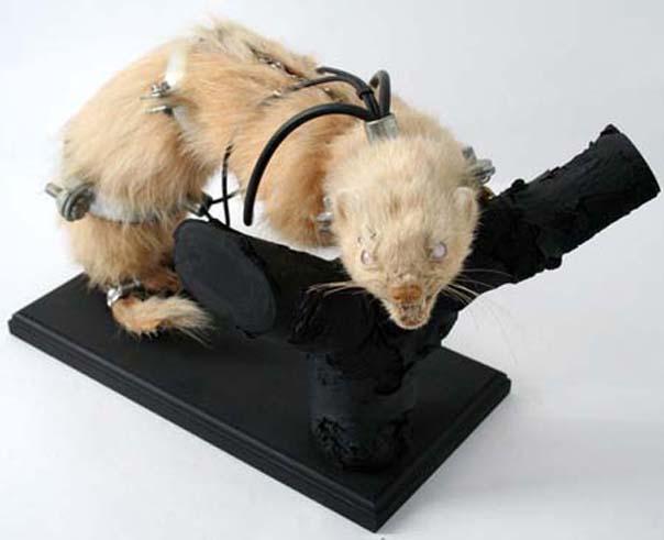 lisa-black ferret